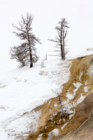 Mammoth Hot Springs (1)